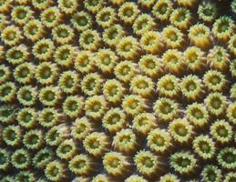 18. Corales