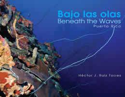 Bajo las olas (Beneath the Waves)