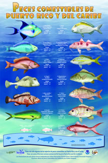 peces_comestibles