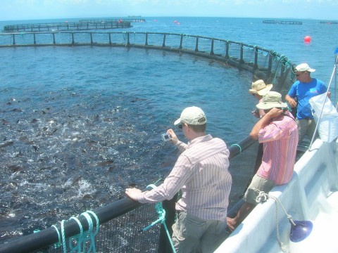 Opportunity for funding in aquaculture research projects