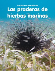 Las praderas de hierbas marinas
