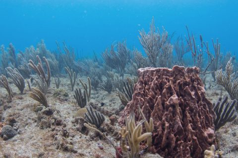 Puerto Rico Coral Reef Ecosystem Valuation