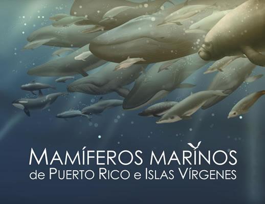 Mamíferos marinos de Puerto Rico e Islas Vírgenes