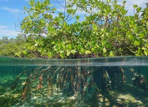 PUERTO RICO SEA GRANT APPLIED RESEARCH COMPETITION REQUEST FOR LETTERS OF INTENT AND FULL PROPOSALS (RFP) 2020-2022