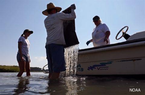 Oportunidades de financiamiento de Sea Grant para Acuicultura