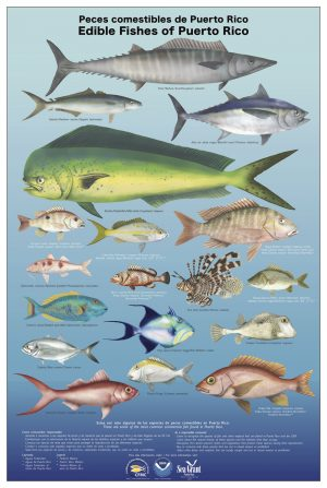 Edible Fishes of Puerto Rico